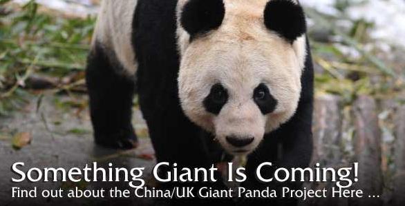 Een echte panda zien!