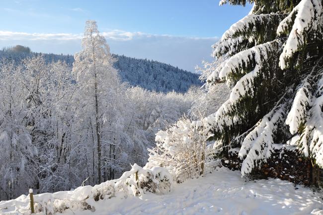 Witte kersten
