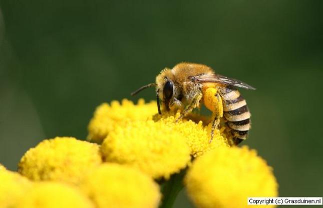 2012: Het bijenjaar