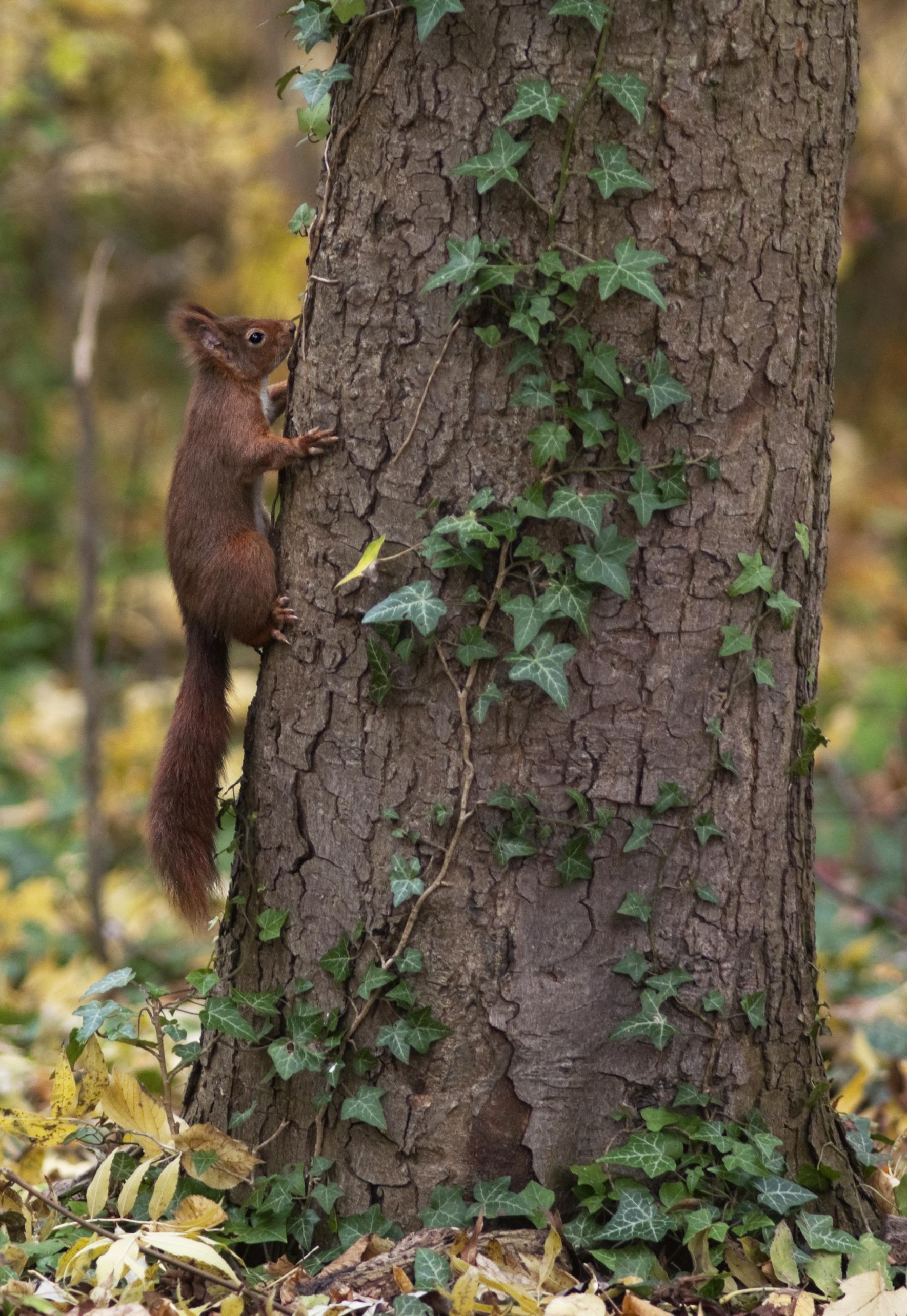 Eekhoorn op zijn boom roots magazine - Hoe je een eigentijdse inrichting van ...
