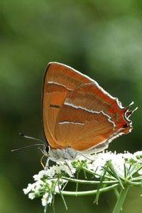 Slimme vlinderspeurders