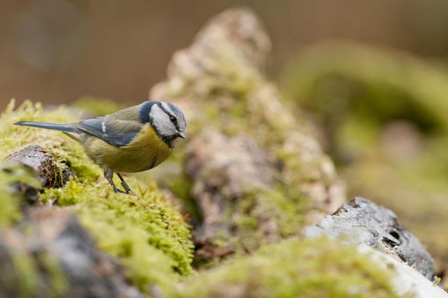 Vogels in het voorjaar