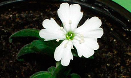 Plant van 32.000 jaar komt tot bloei