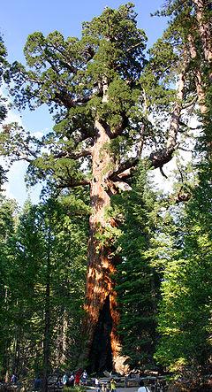De tien hoogste bomen