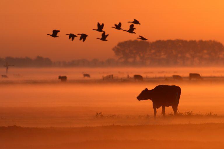 Zuid-Amerikaanse bossen gekapt voor onze koeien