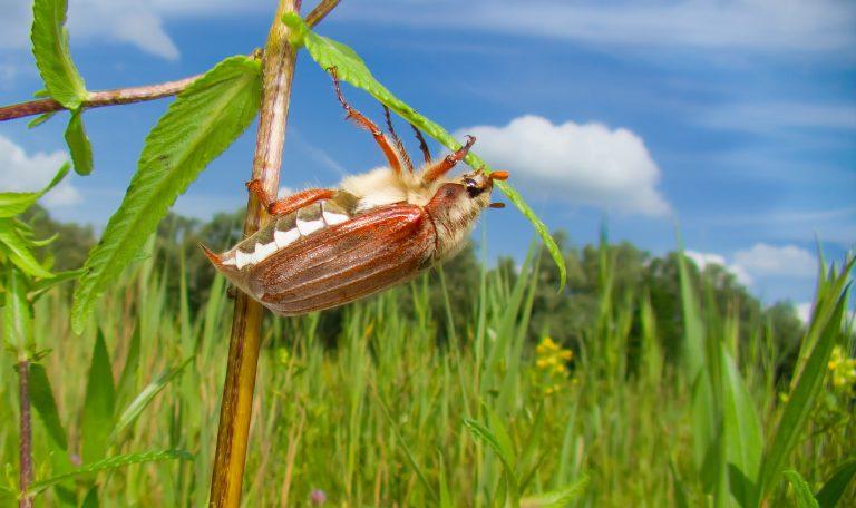 Nieuw: een camera die insecten telt