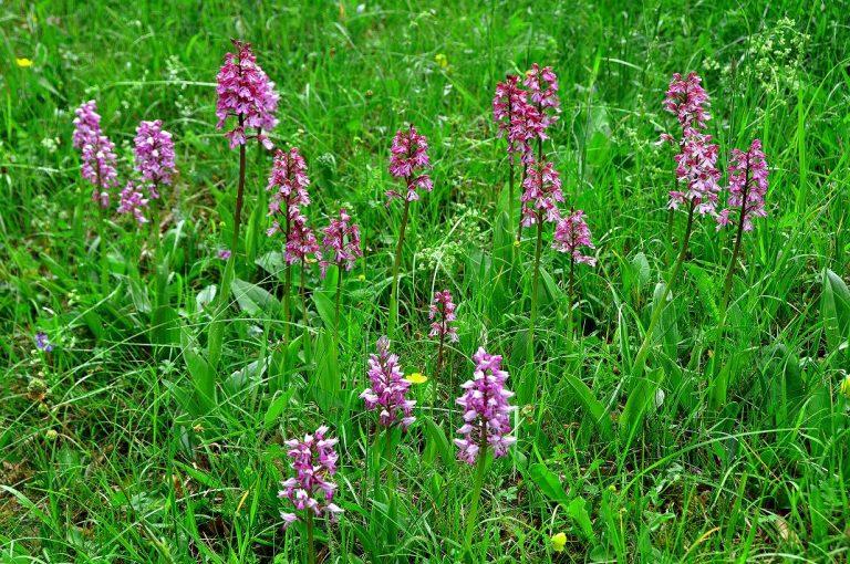 Bloeiende orchideeën