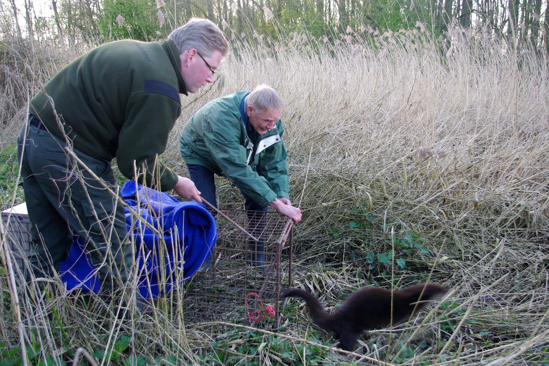 Een beetje hulp voor de otters
