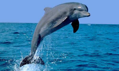 Requiem voor 2 dolfijnen