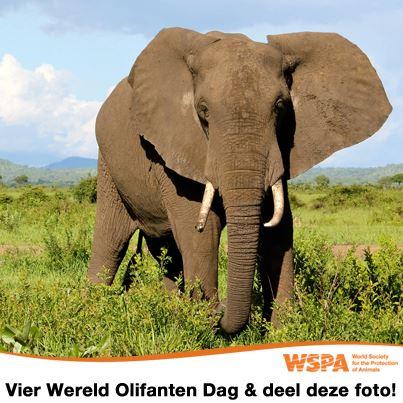 Wereldwijde olifantendag