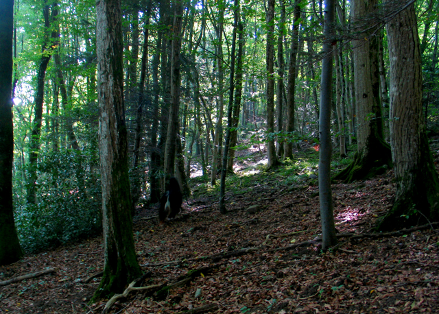 CO2 opname van bossen neemt af