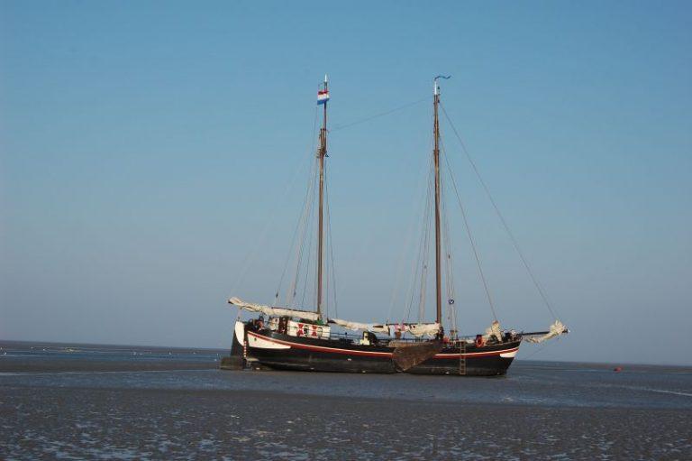 Mee met Roots:  Zeilen en vogelen op het wad en het Lauwersmeer