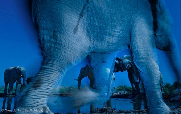 De winnaars van de Wildlife Photographer of the Year wedstrijd