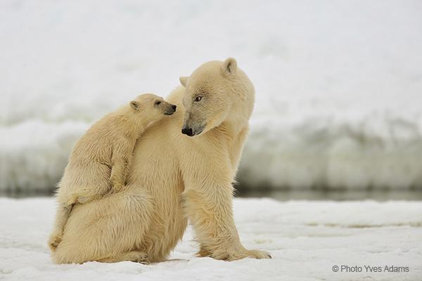 Winnaars Global Arctic Awards 2013 bekend