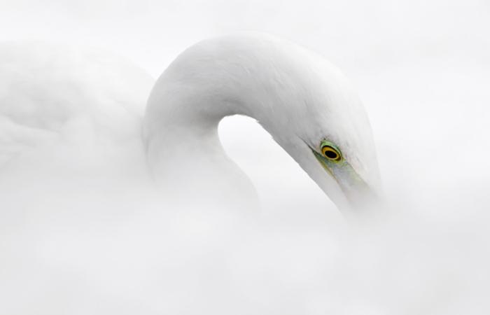 16 februari – Natuurfotografie in het Museon