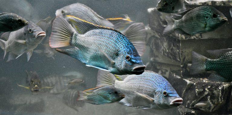 Hebben vissen dorst?