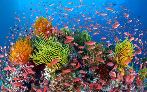 Foto: Gary Bell/Oceanwidelmages.com