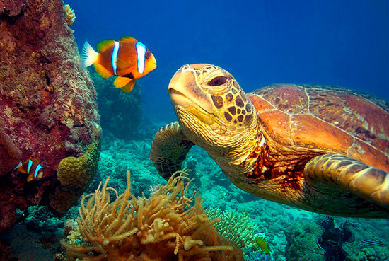 WNF start actie voor wereldzeeën