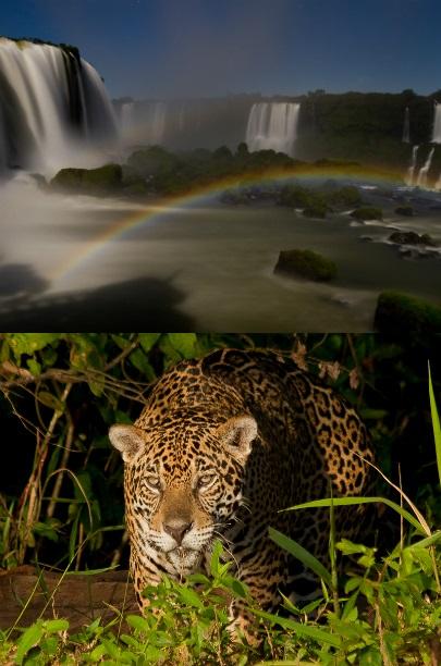 De natuur van Brazilie op tv