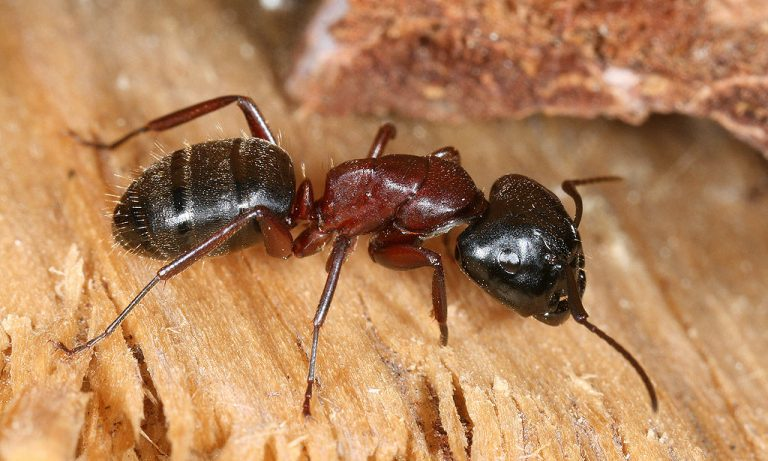 Mieren gaan ontbossing tegen