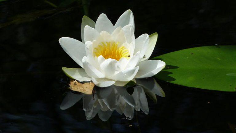 5 juli tot en met 31 augustus – Varen tussen waterlelies in de Weerribben