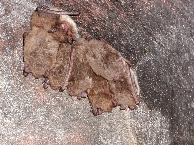 Vrijdag 11 juli – Het leven van vleermuizen op landgoed Huis te Eerbeek