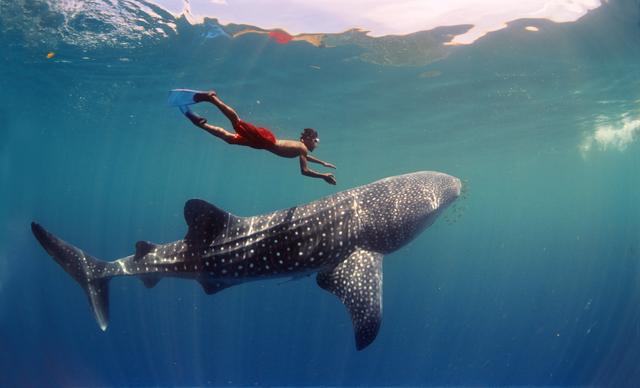 Onderwaterfilm in Omniversum: South Pacific, het tropisch onderwaterparadijs