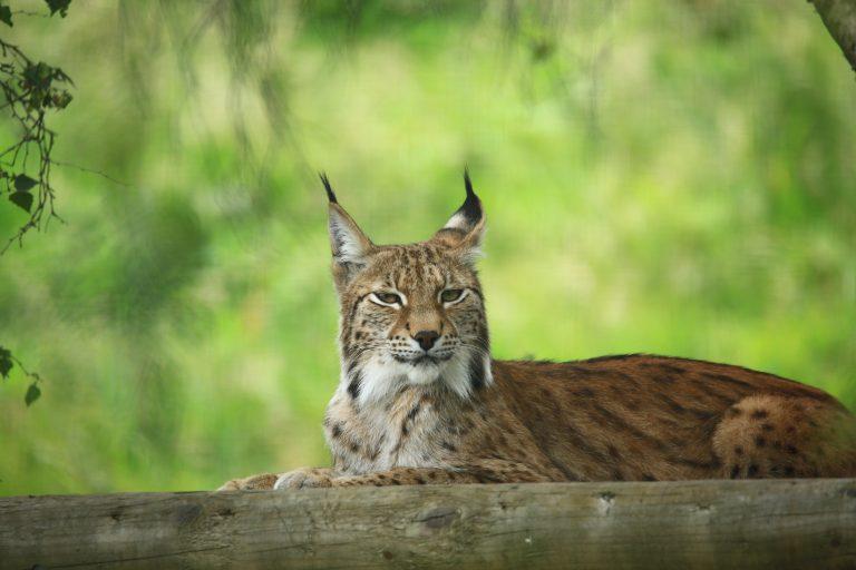 Living Planet Report: Veel wilde dieren in nood, maar er zijn lichtpuntjes!