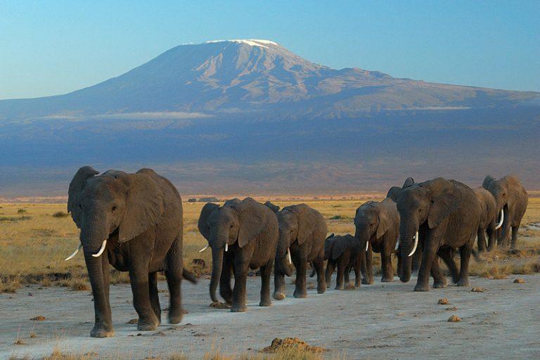 Bijzondere actie voor Wereld Olifantendag