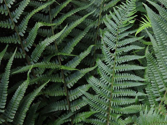 16 -24 augustus – Varens kijken in de Leidse Hortus
