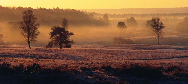 Dit weekend: Heide en schaapskooi bekijken op de Loenermark