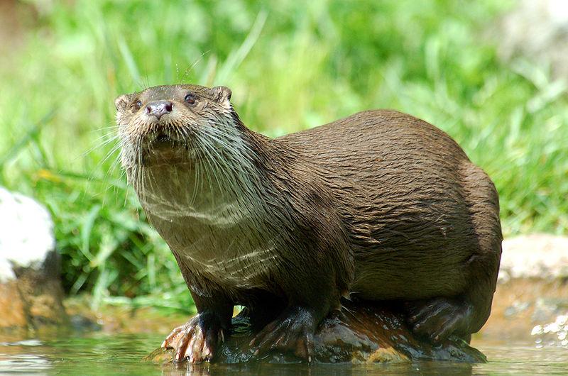 Goed voor de otters?