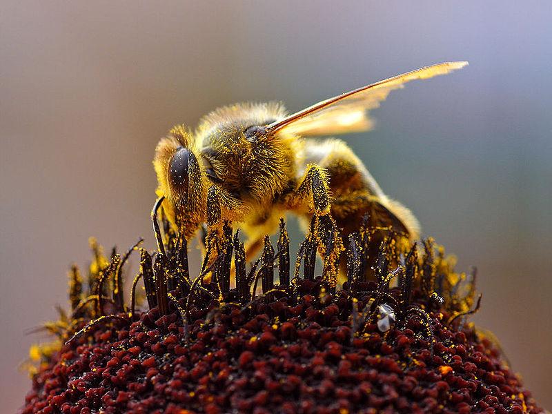 Succesje voor de bijen