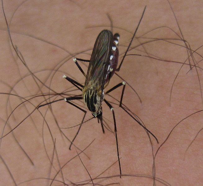 Veel muggen, minder wespen