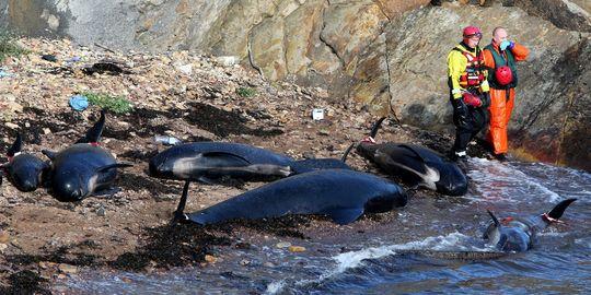 Walvissen aangespoeld