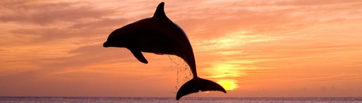 600.000 bezoekers bij Dolphins