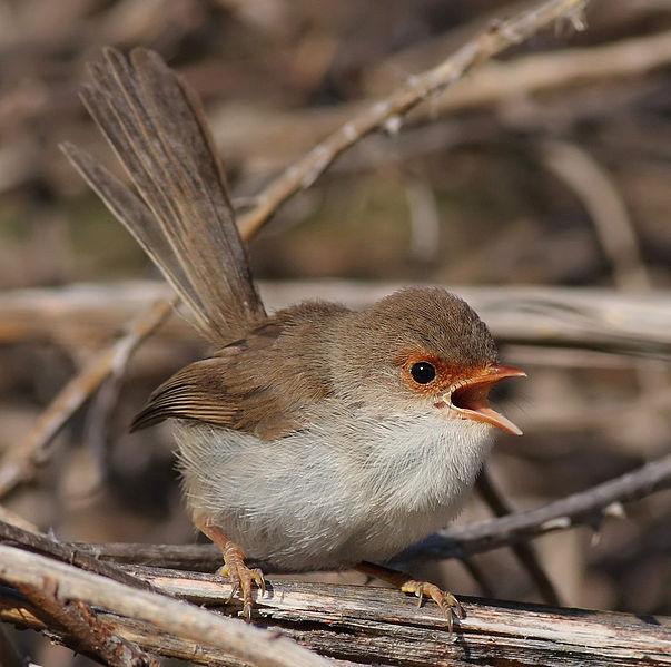 Wachtwoorden in de vogelwereld