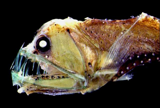 De tien meest afschrikwekkende vissen
