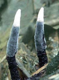 Bijzondere paddenstoel in Burgers Bush