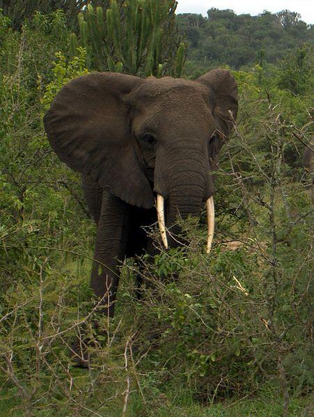 Stop de ivoorhandel