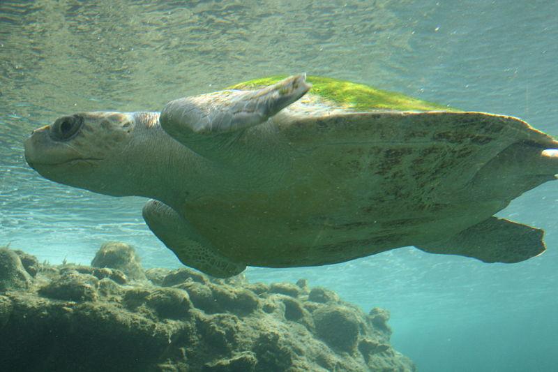 Vrijheid voor de zeeschildpad