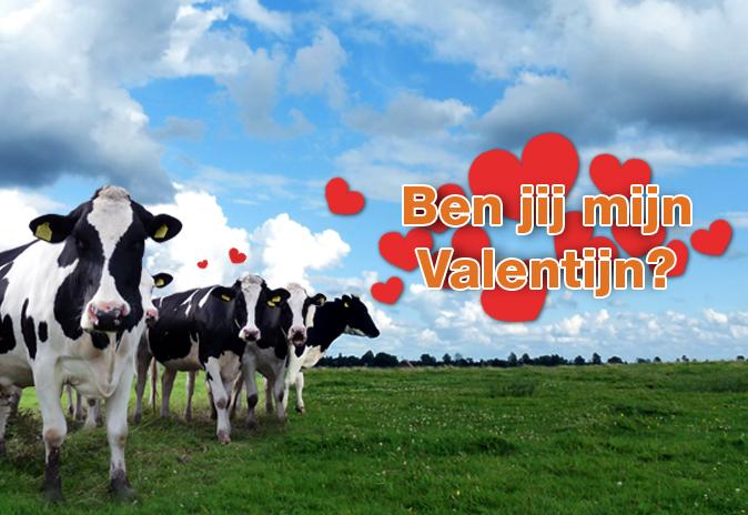Geef de Europese koeien een mooie Valentijnsdag!