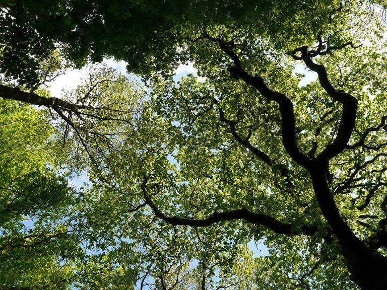 Bomenmakelaar