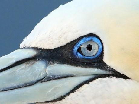 Roots vogelkijkreis naar Helgoland