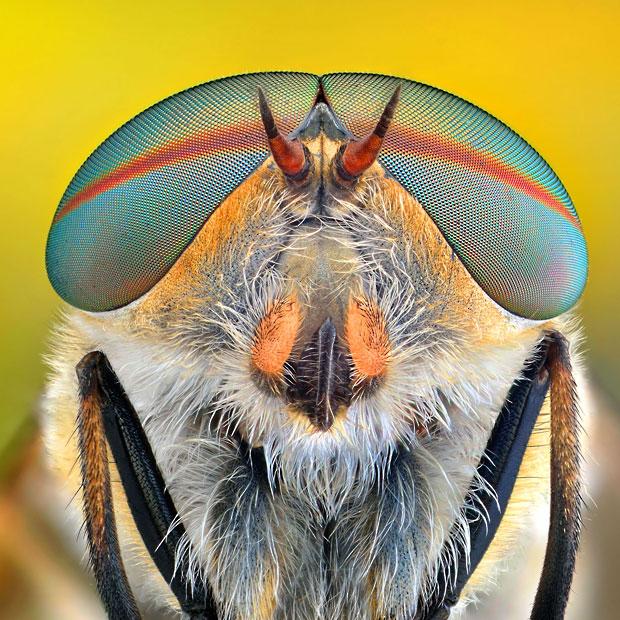 Oog in oog met insecten