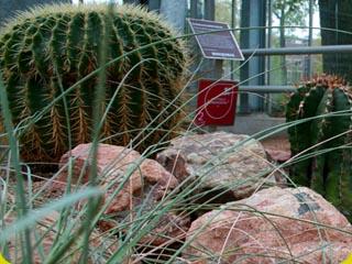 De vernieuwde Woestijnkas in de Amsterdamse Hortus