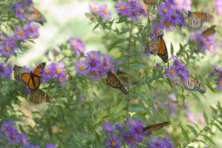 Roots biedt een special vol vlinders