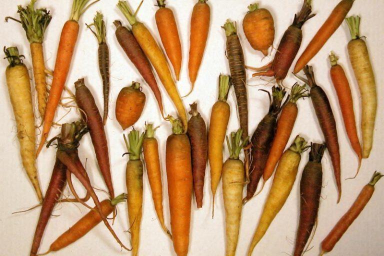Geoogste groente leeft door