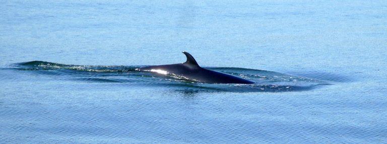 Japan hervat walvisvangst