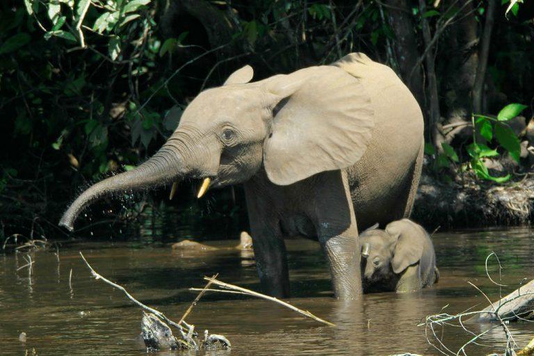 Een mooi kijkje in het leven van de bosolifant